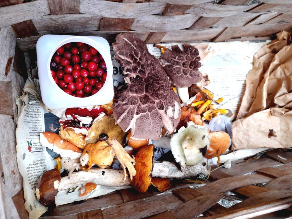 Korg med svamp och tranbär